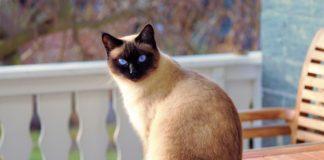 cat recall