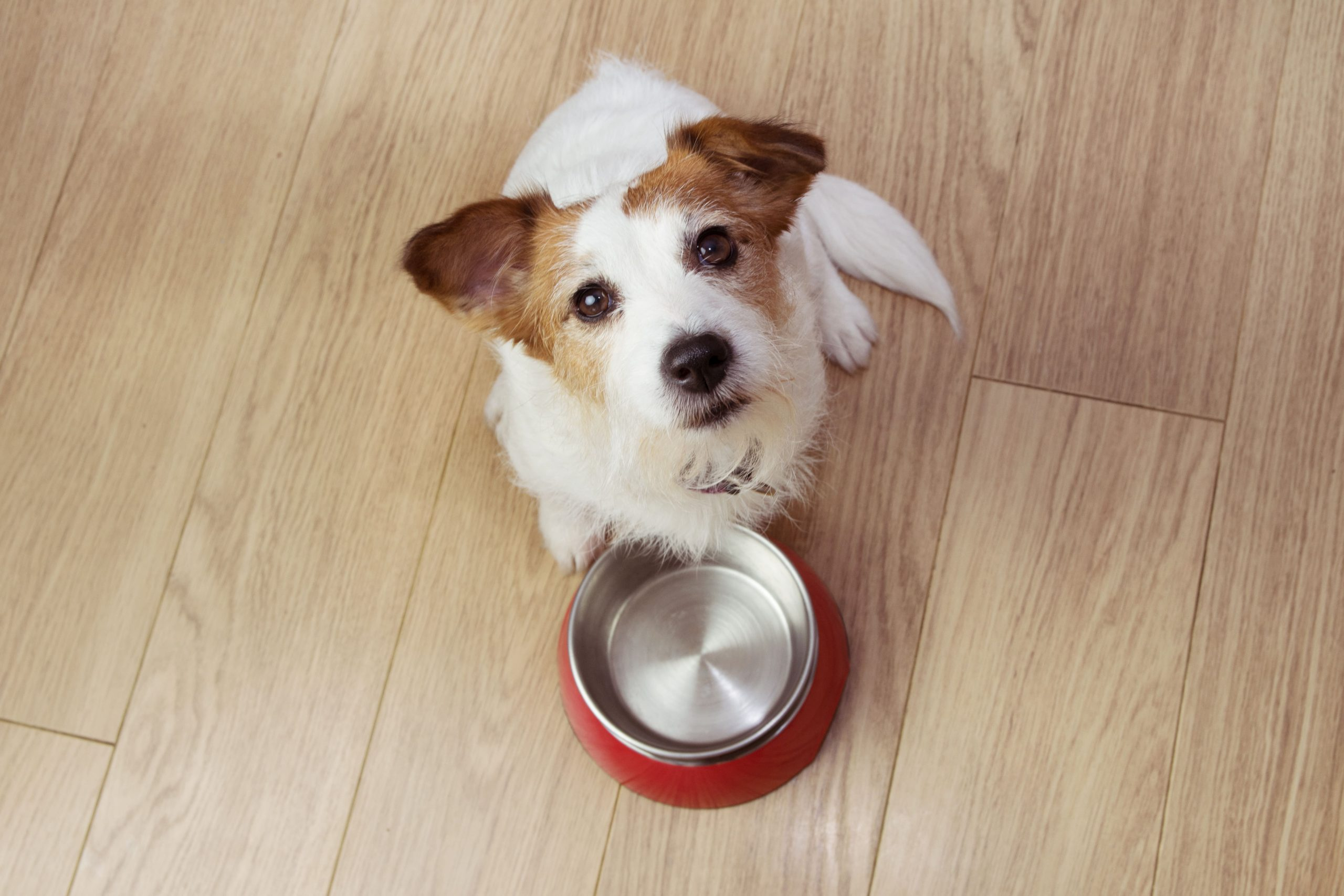 food that is good for your dog